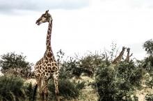South Africa - © Alexej Gorlatch